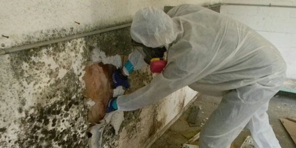 Mold-Removal-and-Remediation-1000x500